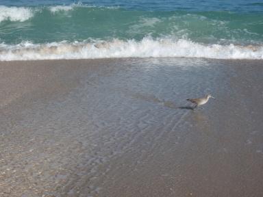 Melbourne Beach Bird Watching